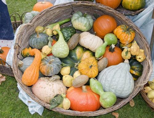 la transition agricole et alimentaire
